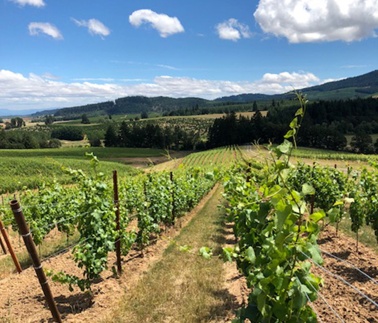 Hampton Purchases Fennwood Vineyard in Yamhill-Carlton