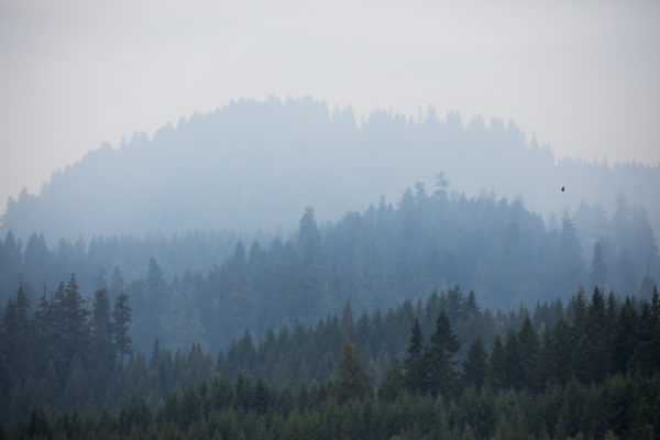 Opinion: Wildfires show need to unite behind forestry solutions